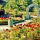Rose Garden at VanDusen Botanical Garden