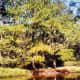 Maclay Gardens scenery