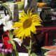 Flowers, fruit and ceramics