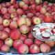 Biodynamic apples