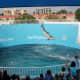 Dolphin show, Clearwater Marine Aquarium