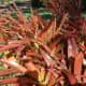 Tropical plants at the pineapple plantation