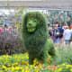 Simba - part of Epcot's International Flower and Garden Festival