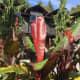 A canna plant by the pavilion entrance