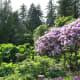 A view in a Stanley Park garden