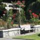 The Burnaby Mountain Park rose garden
