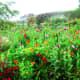 The untamed beauty of Monet's Gardens—raw beauty, a massive sea of flowers.