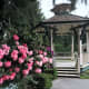 The bandstand and rhododendrons