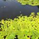 A beautiful pond scene
