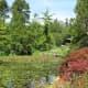 A lovely scene in the garden