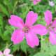 Beautiful colour in the garden