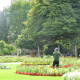 A gardener at work in one of the immaculate Abbey Gardens flowerbeds