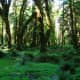 Quinault Rain Forest at Olympic National Park near Seattle, Washington