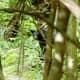 Black bear near Skyland in Shenandoah National Park