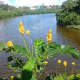 Adyar eco park has a number of water bodies inside