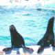 Seals at Hershey Park, 2002.