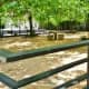 Closeup of Dog Park