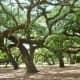 Majestic old oak trees make Baldwin Park special.