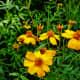 Flowers at the Houston Arboretum