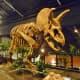 Triceretops horridus – Early Cretaceous – 145 Million Years ago
