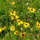 Native wildflowers grown in Mandell Park