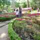 Butterfly shaped garden