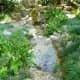 Verdant greenery in the gardens