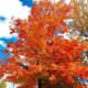 Fall Colors in Liberty Park, Utah
