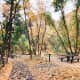 Path Through Millcreek Canyon in Fall