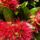 The very beautiful Pōhutukawa flower is a sign that Christmas is here. New Zealanders adore it!