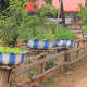 Many villagers have plant tubs made out of old tyres for growing herbs etc, typically, painted in the village colours - blue and white for Nanokhong