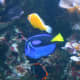 """Our boys loved these fish and were excited to see a real life """"Nemo"""" and """"Dory."""""""