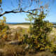 View from the top of the Sleeping Bear Dunes