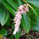 Beautiful tropical flowers in the Waimea Falls Park, Oahu
