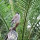 A free flying bird at the Bloedel Conservatory