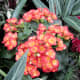 The wide variety of plants that can be seen under the dome is wonderful. This is a kalanchoe.