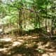 Forested area