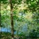 Ponds in the Little Cypress Creek Preserve