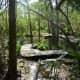 Wooden walkways over water at Moore Sanctuary