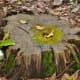 edith-l-moore-nature-sanctuary-photos-information