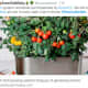 food-shortages-time-for-trump-to-announce-new-victory-gardens-and-urban-food-forests-push