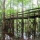 congaree-national-park