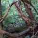 mount-jefferson-state-natural-park-west-jefferson-nc