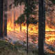 Natural Sources of Air Pollution: Forest Fires