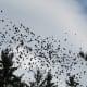 Autumn birds flocking to migrate