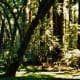 muir-woods-national-monument-old-growth-forest-near-san-francisco