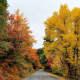 Beautiful fall foliage makes me happy.