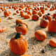 Pumpkins suit the season in both flavor and color.