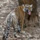 best-tiger-reserves-in-india