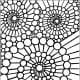 Geometric Design Colouring Pictures Stained Glass Colouring Pages to Print and Colour  - Spirals of Nature
